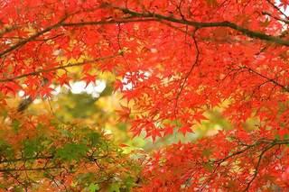 autumn-leaves_00001.jpg